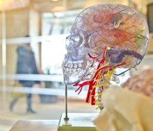 hjerneforskning pic